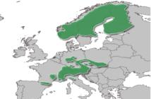Nouvelle carte Europe des activités hivernales !